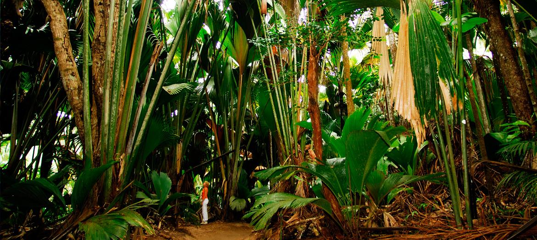 Vallée de Mai à Praslin